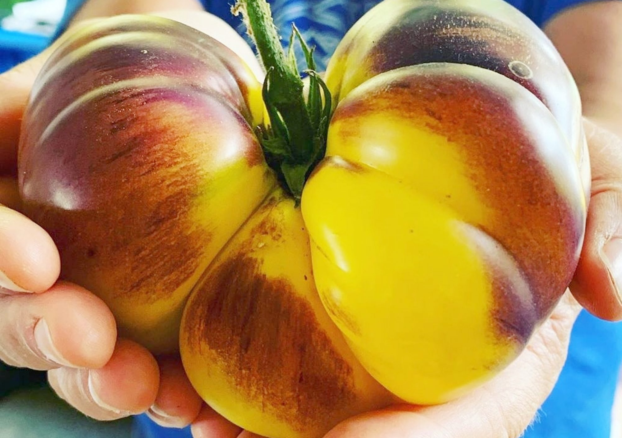 Growing resilient seeds for home gardens to farms